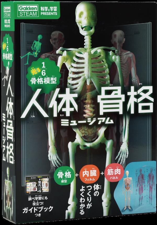 『科学と学習PRESENTS 人体骨格ミュージアム』